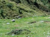 avvistando marmotte