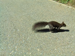 e dagli scoiattoli