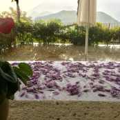 I fiori ad asciugare